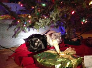 Leo (left) and Starling (right) under the Christmas tree and in front of the mysterious blanket-wrapped package.