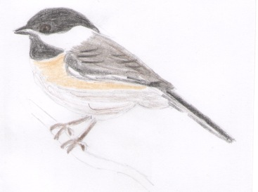Chickadee1